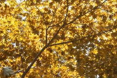 Autumn landscape. Autumn tree leaves sky background, texture, background royalty free stock images