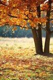 Autumn landscape with tree Royalty Free Stock Photos