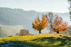 Autumn landscape, a tree with orange leaves in the foreground, t Stock Image