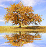 Autumn landscape with tree Royalty Free Stock Image