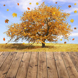 Autumn landscape with tree Stock Photography