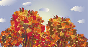 Autumn landscape with trees Royalty Free Stock Photos