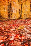 Autumn landscape,trees around small road and dry leaves on  ground. Soft view of Autumn landscape,trees around and dry leaves on the ground.Digital structure of Stock Photo