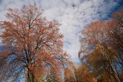 Autumn landscape, trees royalty free stock photos