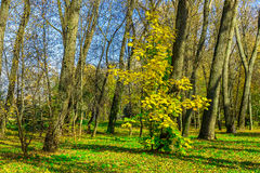 Autumn Landscape of Trees with Bare Branches Royalty Free Stock Photography