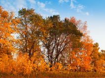 Autumn landscape with trees Stock Images