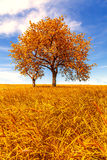 Autumn landscape with trees Royalty Free Stock Photography