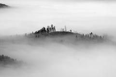 Autumn landscape. With trees an fog Stock Photos