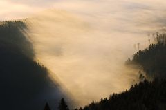 Autumn landscape. With trees and fog Stock Photography