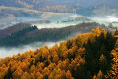 Autumn landscape. With trees an fog Stock Images