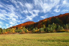 Autumn landscape with trees and lawn in the foreground. The autu Royalty Free Stock Images