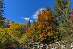 Autumn landscape with trees. And a mountain in the center royalty free stock photos