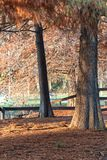 Autumn landscape in the park. Autumn landscape of trees in the park stock images