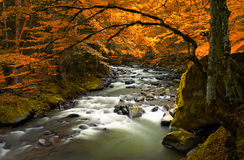 Autumn landscape with trees and river Royalty Free Stock Images