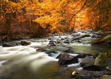 Autumn landscape with trees and river Stock Photos