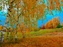 Autumn landscape with trees Royalty Free Stock Image