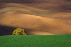 Autumn landscape with trees and waved fields. Royalty Free Stock Image