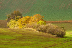 Autumn landscape with trees and waved fields. Stock Images