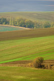 Autumn landscape with trees and waved fields. Royalty Free Stock Photography
