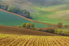 Autumn landscape with trees and waved fields. Stock Photos