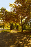 Autumn landscape. Trees, yellow leaves, autumn path Royalty Free Stock Photography