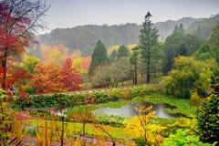 Autumn landscape under the rain Stock Images