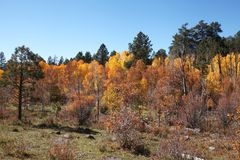 Autumn Landscape Utah Royaltyfri Bild