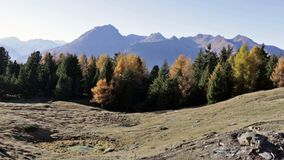 Autumn landscape in Valtellina in Italy. Autumn forest in the mountains of Mortirolo in Valtellina, Italy stock footage