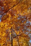 Colorful trees in the fall. Autumn landscape with various colorful trees Royalty Free Stock Photos