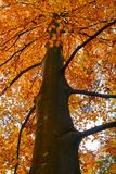Colorful trees in the fall. Autumn landscape with various colorful trees Stock Photography