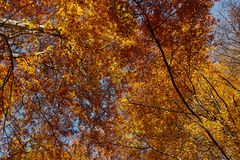 Colorful trees in the fall. Autumn landscape with various colorful trees Stock Image
