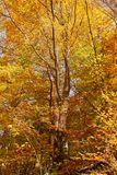 Colorful trees in the fall. Autumn landscape with various colorful trees Royalty Free Stock Photo