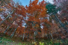 Colorful trees in the fall. Autumn landscape with various colorful trees Stock Photos
