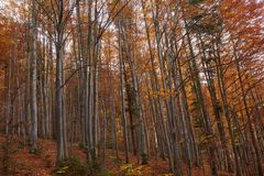Colorful trees in the fall. Autumn landscape with various colorful trees Stock Photo