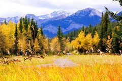Autumn landscape. Vibrant colors of the Canadian Rockies during autumn Royalty Free Stock Image