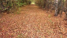 Autumn landscape stock video