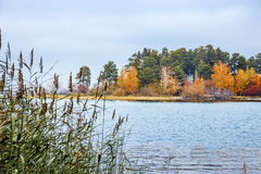 Autumn landscape with a view of the island. Siberia, river Ob Royalty Free Stock Image