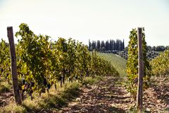 Landscape with valleys of Tuscanian vineyard in Italy. Autumn landscape of vineyard valleys. Italian region-Tuscany. Colored vibrant outdoors horizontal filtered royalty free stock photography