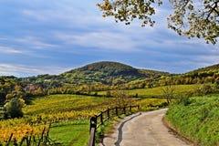 Kahlenberg, Vienna, vineyards stock images