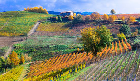Autumn landscape . vineyards and scenic countryside of Piemonte, Italy. Impressive Landscape of Piemonte,multicolored vineyards,Italy stock image