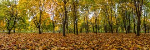 Autumn Landscape Visión panorámica hojas caidas en el parque de la ciudad Imagen de archivo