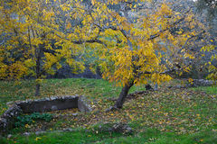 Autumn landscape. Walnuts Royalty Free Stock Images