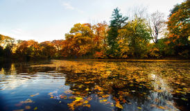 Autumn landscape from water Stock Photography