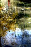 Autumn landscape in water. In autumn,when I passed by Xujiahui Park. I found a water pool at there. and the tall trees were reflected in water. I felt very royalty free stock photos