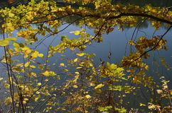 Autumn landscape with water. Autumn Landscape with fallen leaves and water Stock Photography