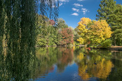 Autumn landscape. With a weeping willow in the foreground Royalty Free Stock Photo