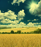 Autumn landscape with wheat field and sunny blue sky Royalty Free Stock Photo