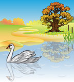 Autumn landscape with a white swan. Royalty Free Stock Images