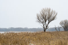 Autumn landscape. Before winter, the first snow Royalty Free Stock Photos