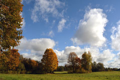 Autumn Landscape With Maple Trees Royalty Free Stock Photography